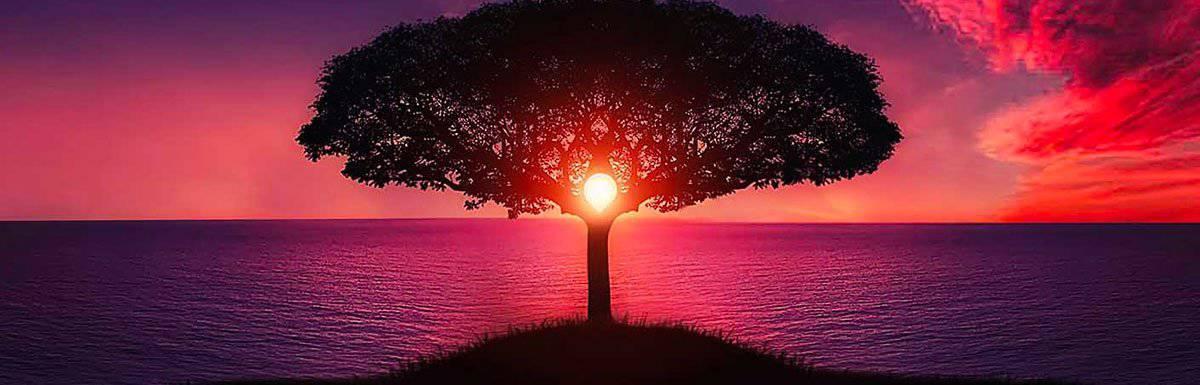 La stratégie, un arbre de ressource